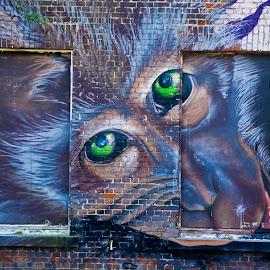 Monkey art by Paula NoGuerra - City,  Street & Park  Street Scenes ( wall art, building, art, artistic, belgium, painting, wall )
