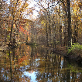 Golden November on the Creek by Marcia Taylor - Landscapes Waterscapes