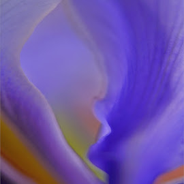 Iris by Kittie Groenewald - Abstract Macro ( flower up close, lilac, abstract art, flower )