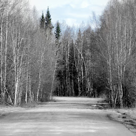 Looking For BlueSkies by Rebecca Weatherford - Novices Only Landscapes ( clouds, sky, selective color, black and white, street, trees, road, nikon )