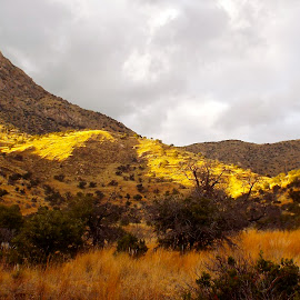 Theres Gold in them hills by Donna Probasco - Novices Only Landscapes
