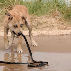 Winnie by Fraya Replinger - Animals - Dogs Playing ( water, leash, lake, puppy, beach, dog )