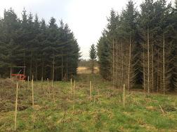 Photo 1&2 -  Spooners Copse Established Alder Trees, Sep 2016
