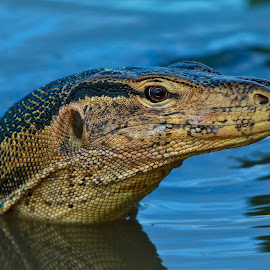 by Simon Yue - Animals Reptiles