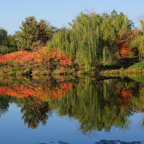 A Mirror Image by Ronald McCafferty - Landscapes Waterscapes