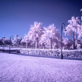Safa park  by Reggie Talledo - City,  Street & Park  City Parks