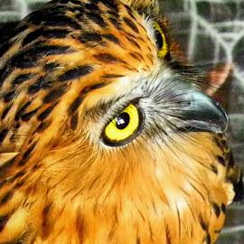 by Sultan Firaun - Animals Birds