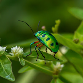 by S Balaji - Animals Insects & Spiders