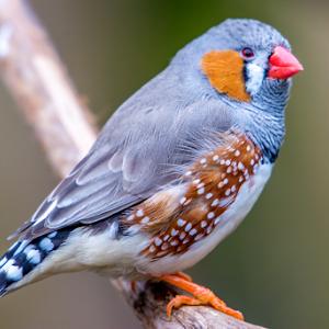 Orange Beaked Bird and Spotted Wings 7 11 17 1-200.jpg