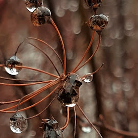 Raindrops by Daniela Badila - Nature Up Close Natural Waterdrops ( nature, autumn, magical, raindrops, rain )
