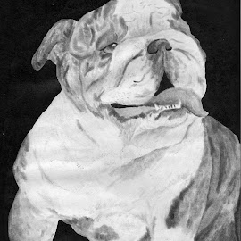 Bulldog by Jackie Nix - Drawing All Drawing ( face, bulldog, charcoal, tongue, shading, dog, drawing, ink )