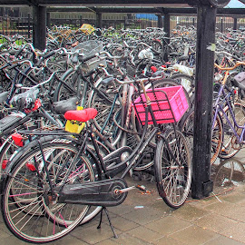 Dutch Mass Transit by John Pounder - Transportation Bicycles ( bike, park, holland, amsterdam, bicycle )