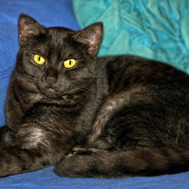 Smokey Black Cat Portrait by Twin Wranglers Baker - Animals - Cats Portraits (  )