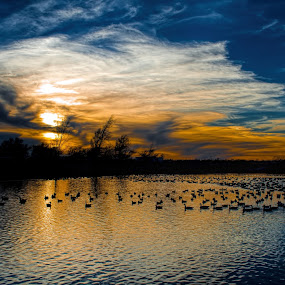 Feathered Friends by Vonda Higgins - Landscapes Waterscapes