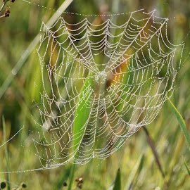 The Web Service by Keith Heinly - Nature Up Close Webs ( fog, florida, wetland, web, morning )