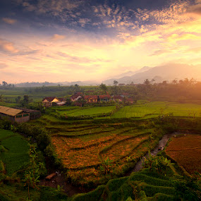 Sunrise at Paddy Field Terrace Garut by Justin Ng - Landscapes Prairies, Meadows & Fields ( justin ng photo, paddy field, village, terrace garut, indonesia, sunrise, justin ng )