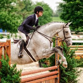 Hurdles by Heather Brooks - Sports & Fitness Other Sports ( horse, equestrian, horseback, horseman, contestant, horsewoman, competition, hunter, jumper, saddles, hurdles, horses,  )