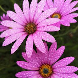 by Sandra Lee - Flowers Flower Arangements