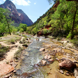 Zion national Park by Dipali S - Landscapes Waterscapes ( curve, mountain, america, angel landing, rock, travel, landscape, usa, preserve, hiking, navajo, travel destination, sky, zion national park, nature, tree, camping, creek, arizona, classic, wild, cowboy, desert, park, national, cliff, wallpaper, forest, backpacking, landmark, national park, red, vacation, utah, sunset, background, outdoor, western, sunrise )