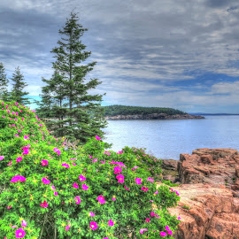 Maine Seashore by Jim Hoover - Landscapes Travel (  )