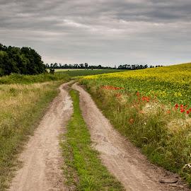 field road by Юрий Лагно - Landscapes Prairies, Meadows & Fields ( clouds, field, summer, road, morning,  )