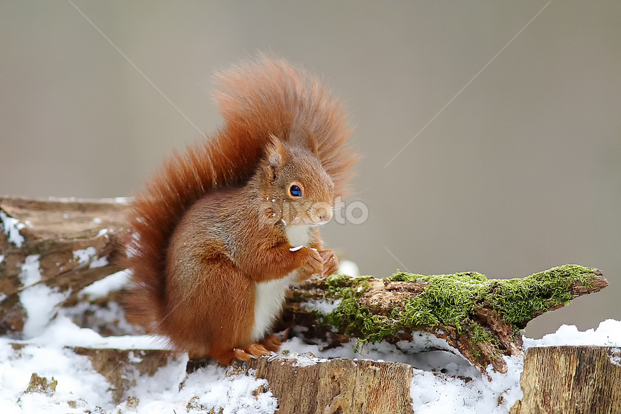 It's cold ! by Gérard CHATENET - Animals Other Mammals