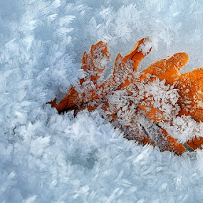 A Winter's Tale by Mary Kay - Nature Up Close Flowers - 2011-2013 ( winter, ice, snow, maria kaimaki, justeline, leaf )