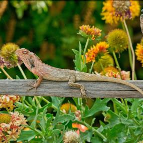 by Adityendra Solanki - Animals Reptiles