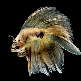 Simple Pose by Arya Suartawan - Animals Fish ( #beta #cupanghias #bali #indonesia #photography )