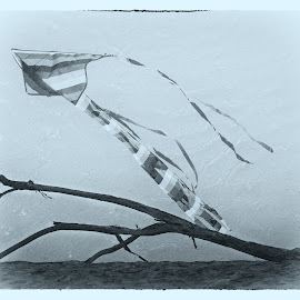 Kite by Simon Hall - Digital Art Things