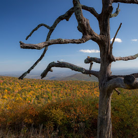 The Bones of Autumn by Tim Davies - Landscapes Mountains & Hills ( tree, colorful, autumn, view, dead )