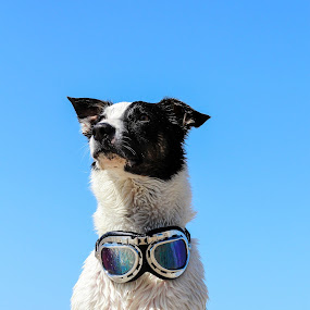Proud at the beach by Ty Hanson - Animals - Dogs Portraits ( border collie, puppy, beach, cute, kida, animal )