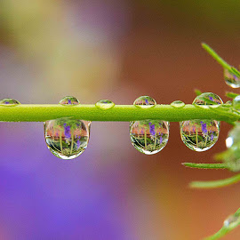 by Jay Stout - Nature Up Close Natural Waterdrops