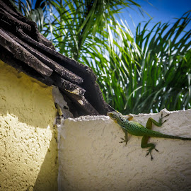 Vacation House Visitor by Ruth Sano - Animals Reptiles ( lizard, gecko, green, reptile )