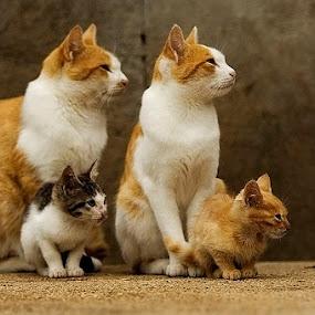 interloper by Ante Gašpar - Animals - Cats Portraits