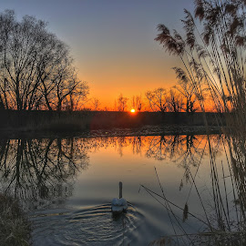 End of Swan's day by Ivica Skočić - Instagram & Mobile iPhone ( reflection, nature, sunset, swan, lake )