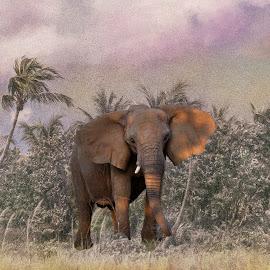 lost by William Underwood  - Digital Art Animals