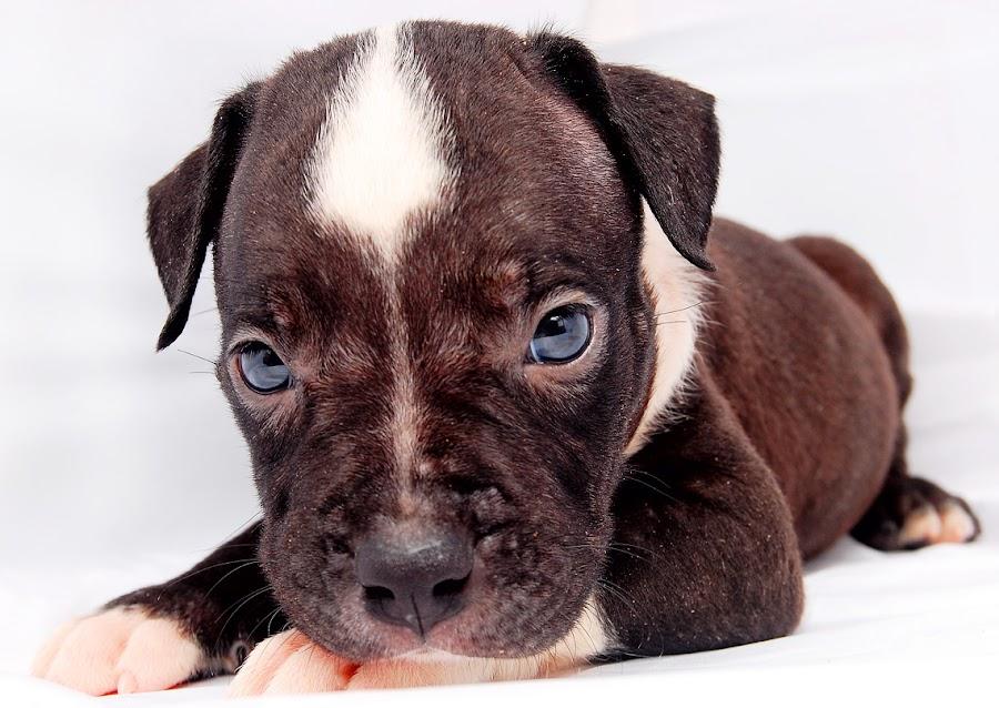 by Tensi Toga Raditya - Animals - Dogs Puppies