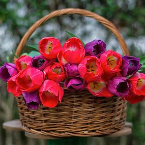 by Luca Arșinel - Flowers Flower Arangements (  )