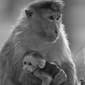 Mommy i want to play by Praveen Premkumar - Black & White Animals ( explore, wild, life, naughty, care )
