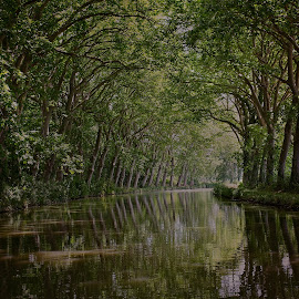 Tunnel of green by Ashleigh Tasker - Landscapes Forests ( water, reflection, grass, green, france, travel, canal, tunnel,  )