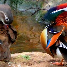 soul mates by Nicole Janse van Vuuren - Novices Only Wildlife