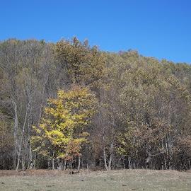 Есен by Georgi Kolev - Novices Only Landscapes ( небе., гора., есен., време., трева. )