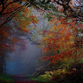 Autumn Mist by Sharon Davies - Novices Only Landscapes ( autumn, fall, trees, leaves, mist )