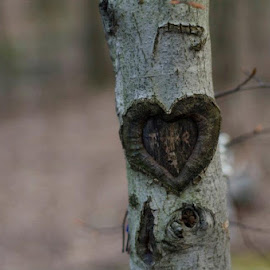 Carved with Love by Chris Demchak - Nature Up Close Trees & Bushes (  )