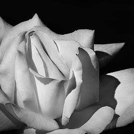 by Shawn Thomas - Black & White Flowers & Plants