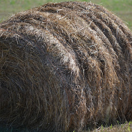 Large Round Bale by Tina Tippett - Nature Up Close Gardens & Produce ( gardens & produce, farm life, nature up close,  )