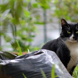 Vira Latas by Altair Junior - Animals - Cats Portraits