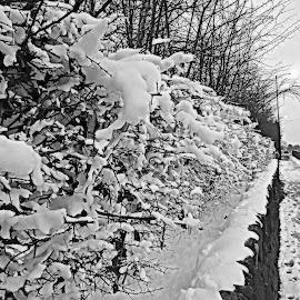 Ice Cream... by Michelle Dimascio - Black & White Street & Candid ( walks, nature, blk & white, snow, weather,  )