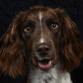 Trixie by Philip Watts - Animals - Dogs Portraits